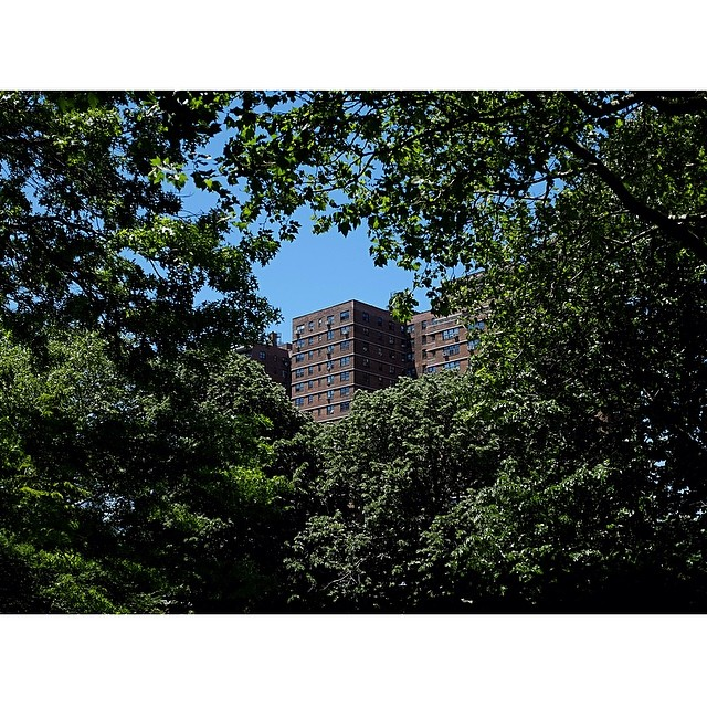 Hello NYC summer, glad you finally made it.#nyc #summer #les #reportage #trees #leaves #joefornabaio