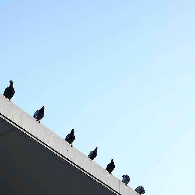 Morning commute.#morningcommute #pigeon #lookup #nyc #les #lowereastside #joefornabaio
