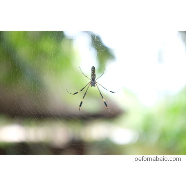 Hangin' around waiting for the next session.#hangin #spider #hanging #joefornabaio #costarica #hangingaround #surfsession