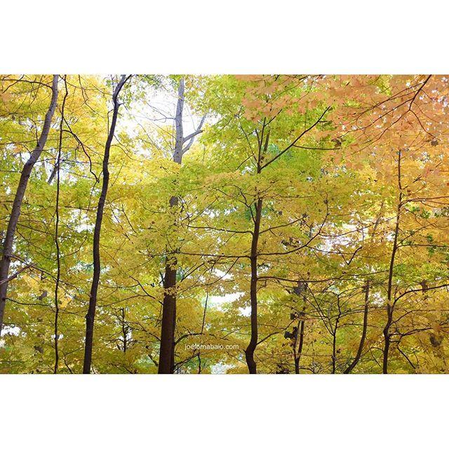 Hope you had a great weekend. #fallcolors #nystateofmind #joefornabaio #newyork #trees #fall #getoutside #weekend