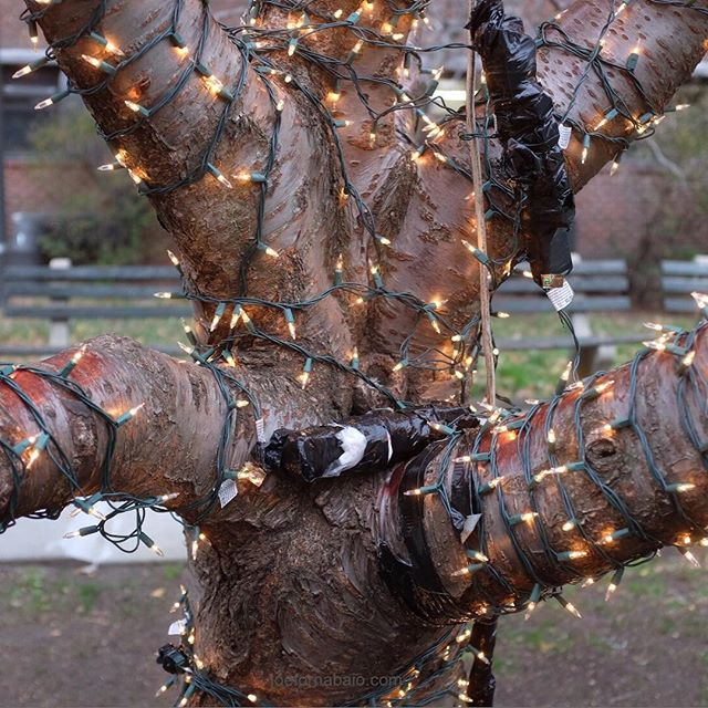Same fuzzy holiday spirit. Just more electrical tape.#holiday #tree #joefornabaio #tape #christmaslights #nyc #electricaltape