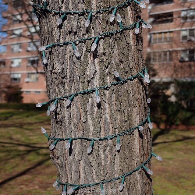 21 days until spring.#christmaslights #tree #joefornabaio #sunday #nyc #springiscoming #21 #spring