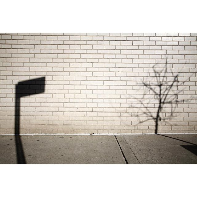 """I don't have a philosophy, I have a camera.""Saul Leiter said it, I took the pic.#shadows #nyc #joefornabaio #tree #streetsign"