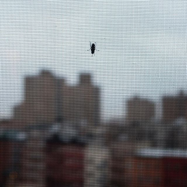 Staycation + cold/flu = This is what you get.#staycation #nyc #fly #joefornabaio #bug #window #lowereastside #sick #cold #flu #notfun