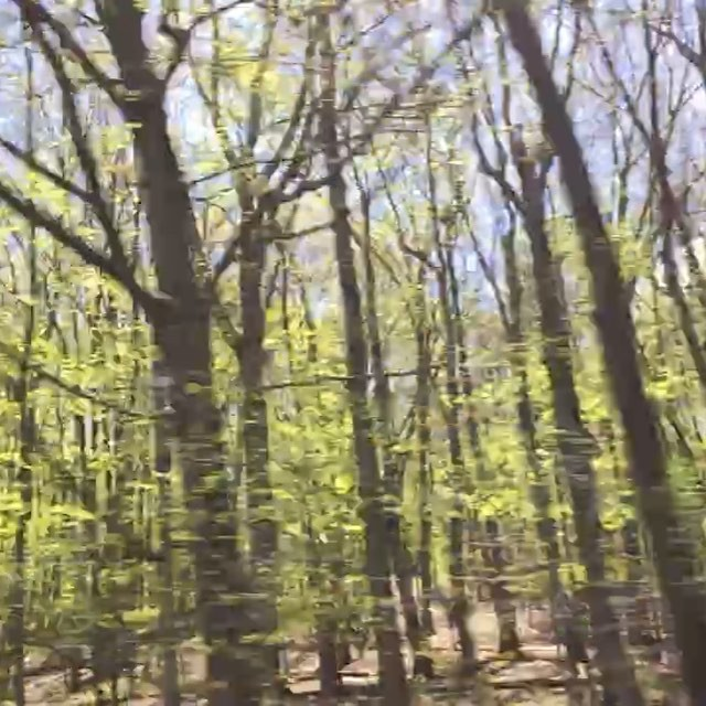 On our way...#trees #upstate #joefornabaio #highway #i84 #driveby